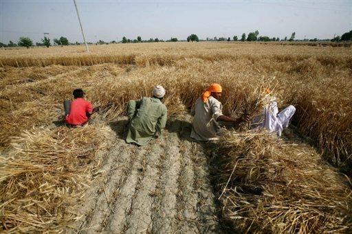blé Inde