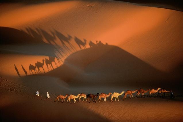 Caravane de dromadaires aux environs de Nouakchott, Mauritanie (18°09' N - 15°29' O). © Yann Arthus-Bertrand/Altitude