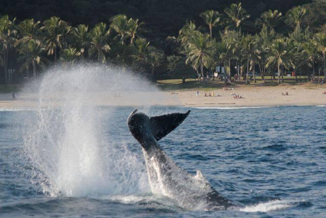 Observation de baleines au large des côtes réunionnaises en juillet 2013. © Globice