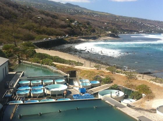 St Leu, La Réunion. Les bassins de soin du centre de conservation Kélonia.
