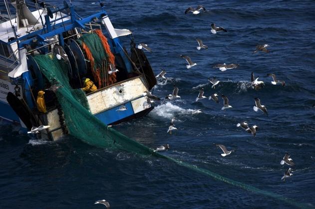 Chalutier le « Caraïbes » en mer d'Iroise au large de l'île d'Ouessant, Finistère, France (48°25' N – 5°05' O). © Yann Arthus-Bertrand/Altitude