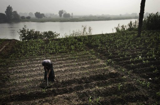 An Egyptian farmer tends to his fields on the banks of the Rasheed river in the northern Giza province on June 22, 2013 © AFP/File Gianluigi Guercia