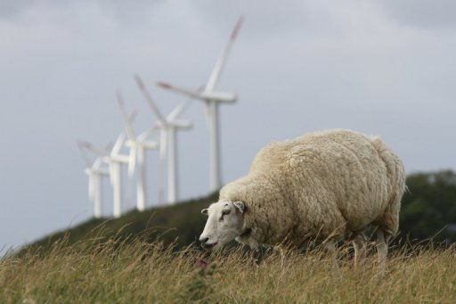 A sheep grazes near wind turbines on Pellworm island, northern Germany, on August 9, 2013. The sleepy North Sea outpost has for decades been a pioneer in solar and wind power. © AFP Frank Zeller