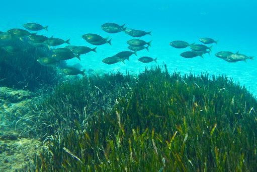 La hausse de la température, l'acidification et la baisse de l'oxygénation seraient responsables de la dégradation accélérée des océans © AFP/Archives Boris Horvat