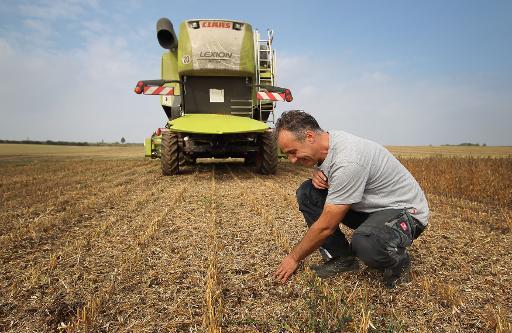 Armin Meitzler dans un de ses champs de soja à Freimersheim, le 26 septembre 2013 © AFP/Archives Daniel Roland