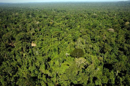 amazonienne