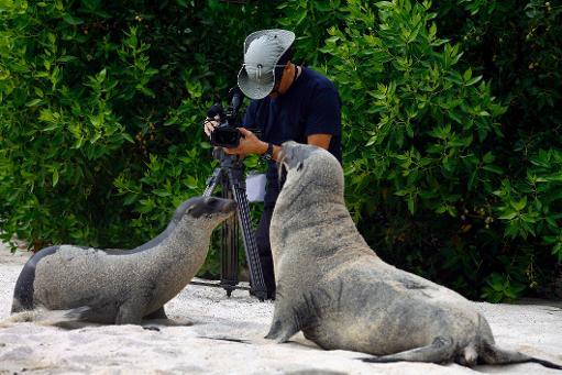 Le réchauffement du Pacifique, connu sous le nom d'El Niño en Amérique latine, menace-t-il de mort le célèbre archipel équatorien des Galapagos? Une équipe scientifique va sonder l'océan pour en avoir le coeur net. © AFP/Archives Pablo Cozzaglio