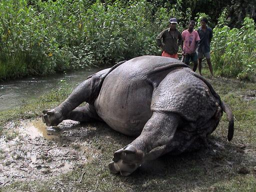 In this photograph taken, on July 31, 2006, forest workers look at a dead rhinoceros at the Chitwan National Park in southern Nepal © AFP/File Prabhakar Ghimire