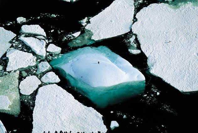 Icebergs et manchots Adélie, terre Adélie, Antarctique (pôle Sud) (66°00' S - 141°00' E). © Yann Arthus-Bertrand/Altitude