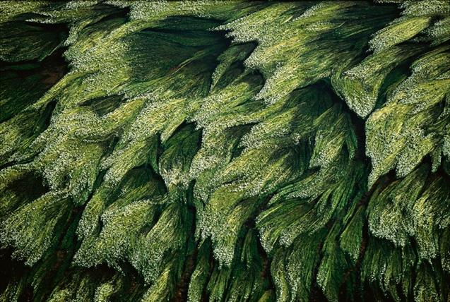 vegetation subaquatique
