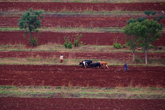 Labours près de Hlatikulu, région de Shiselweni, Royaume du Swaziland (26°56' S - 31°21' E). © Yann Arthus-Bertrand