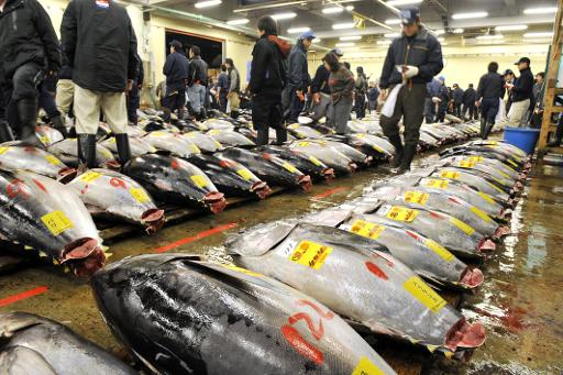 atlantic tuna quotas