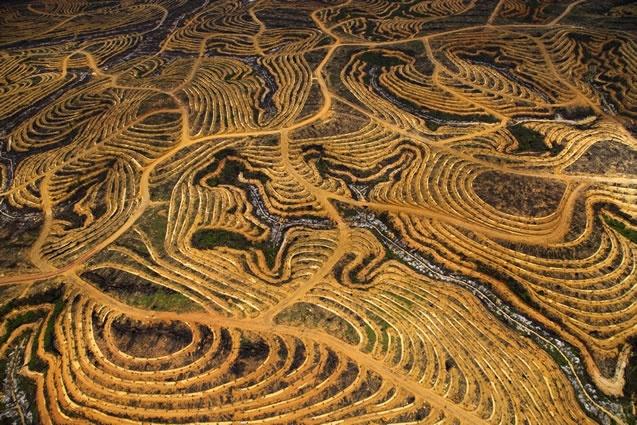 Nouvelle plantation de palmiers à huile près de Pundu, Bornéo, Indonésie (1°59' S - 113°06' E). En Indonésie, en Malaisie et en Papouasie Nouvelle Guinée, entre 1990 et 2010, 3,5 millions d'hectares de forêt ont été rasées pour faire place à des plantations de palmiers à huile. © Yann Arthus-Bertrand