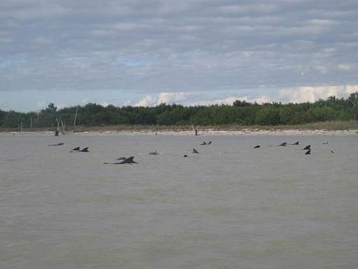 baleines échouées en Floride