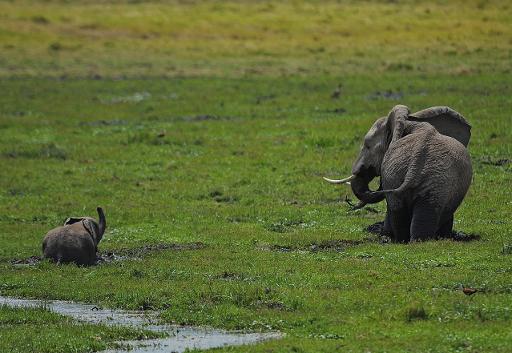 braconnage d'éléphants en Tanzanie
