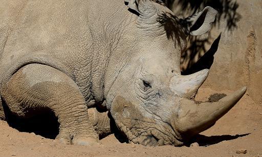 S. Africa poaching