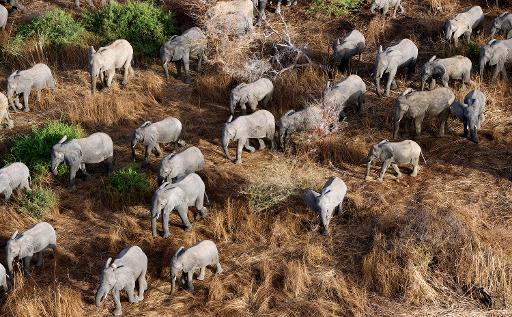 sauver les éléphants d'Afrique