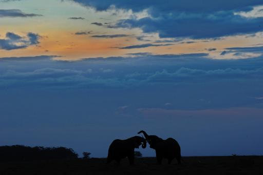 Tanzania elephant poaching