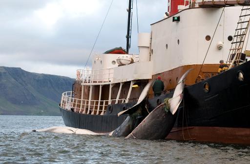 2014 whaling quotas