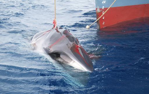 navires baleiniers