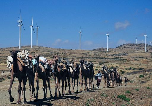 Camels walk along the road near turbines at Ashegoda wind farm in Ethiopia's northern Tigray region, on November 28, 2013 © AFP/File Jenny Vaughan