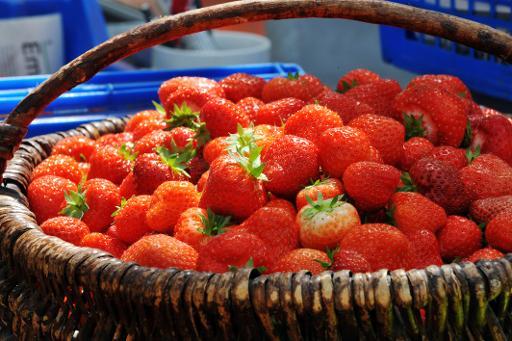 fraises aux pesticides