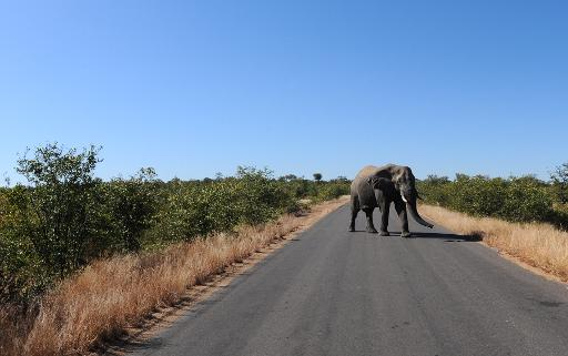 attacking tourists in S.Africa