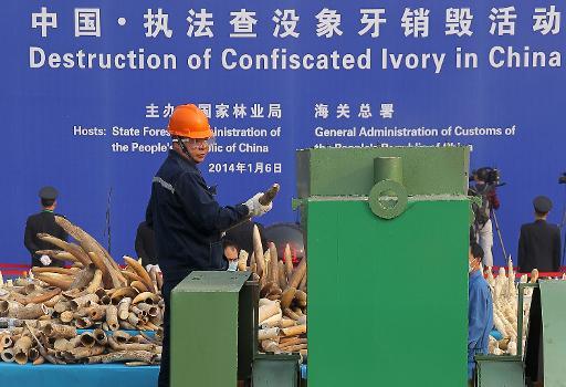 six tonnes d'ivoire