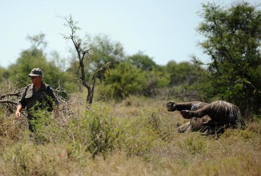 rhinocéros tués