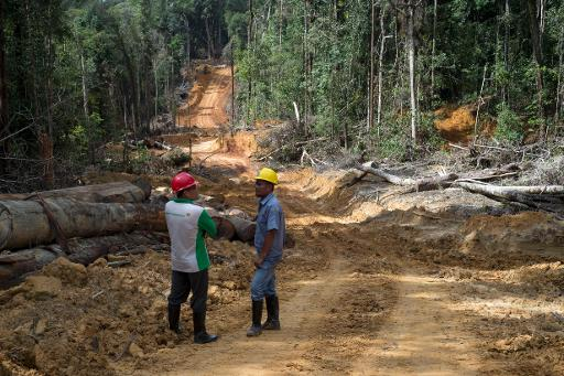 corrupt forestry sector