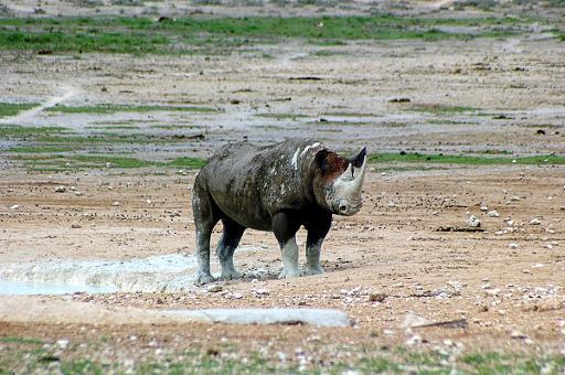 Permit to kill Namibia black rhino
