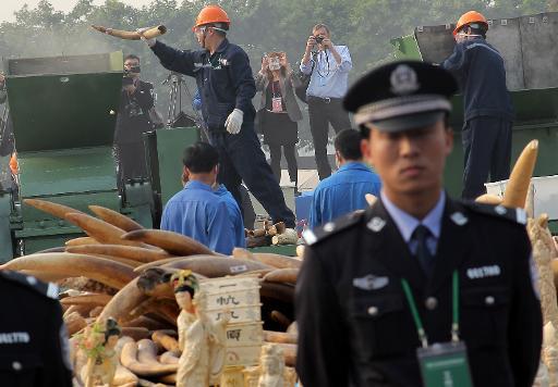 China crushes six tonnes of ivory