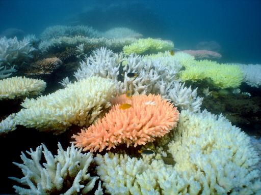 Australia's Great Barrier Reef Marine Park Authority approves the dumping of up to three million cubic metres of dredge material within the park's boundaries © AIMS/AFP Ray Berkelmans