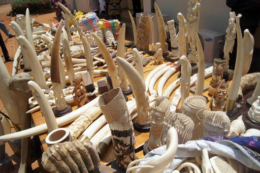 Part of the 700kg of ivory seized on August 6, 2013 by the Togolese police, as they are exhibited for journalists in Lome on August 9, 2013 © AFP/File Emile Kouton