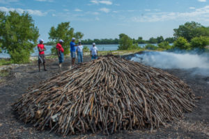 Jean Weiner et l'équipe de FoProBIM découvrent un chantier clandestin de fabrication de charbon de bois. Photo : Goldman Environment Prize