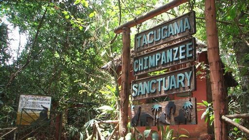 réserve de chimpanzés