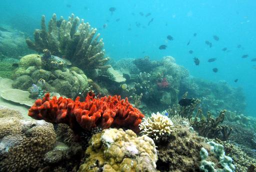 coraux ADN