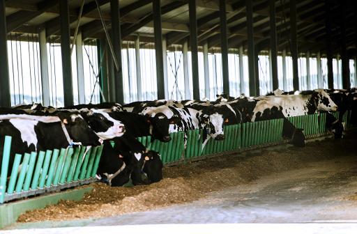 ferme des 100 vaches