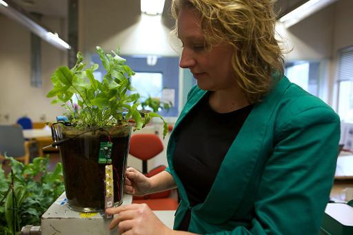 La scientifique hollandaise Marjolein Helder, co-foundatrice de Plant-e, à Wageningen le 5 février 2015 © AFP NICOLAS DELAUNAY