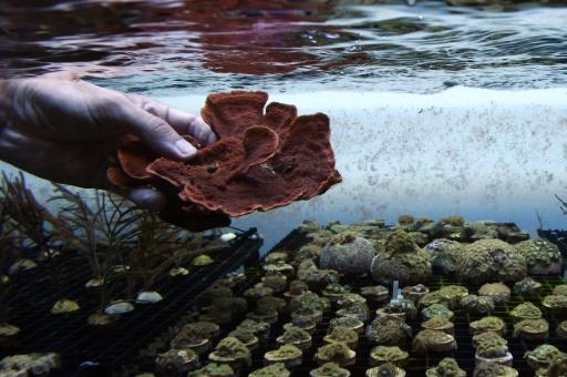 ferme de coraux