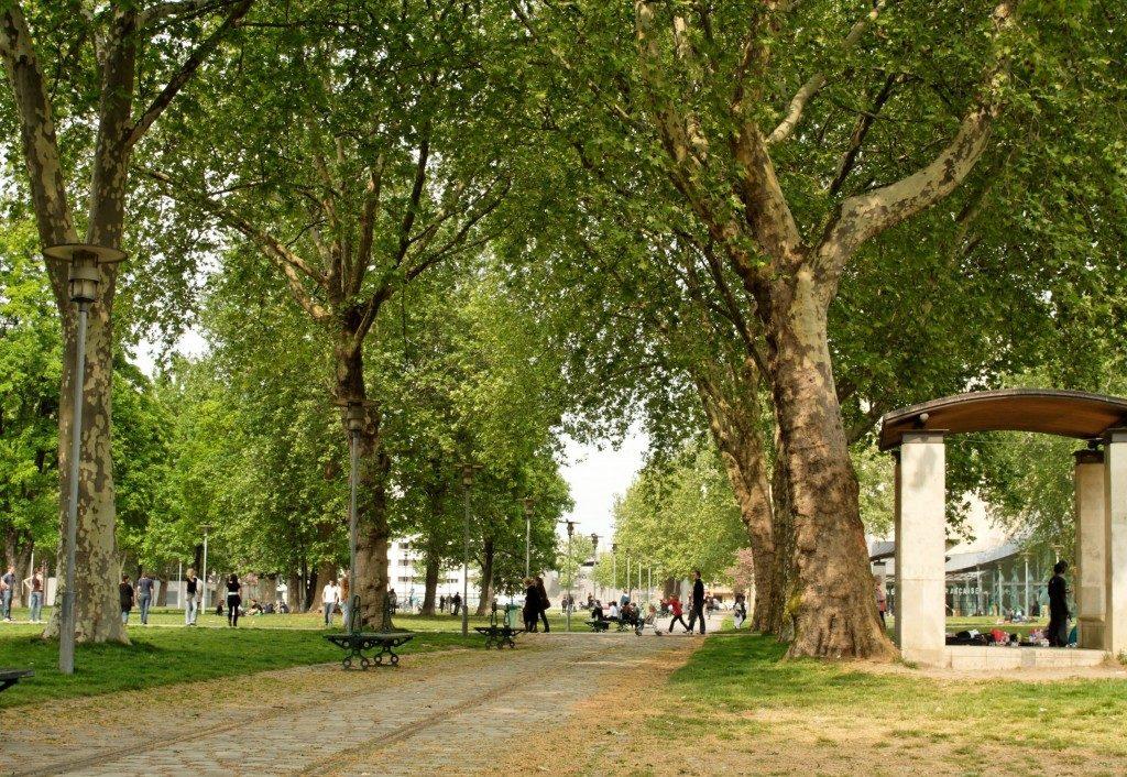 Les_arbres_centenaires_du_parc_de_Bercy_à_Paris-1024x706