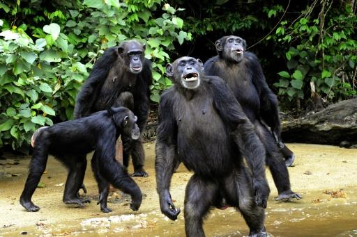 îles aux singes