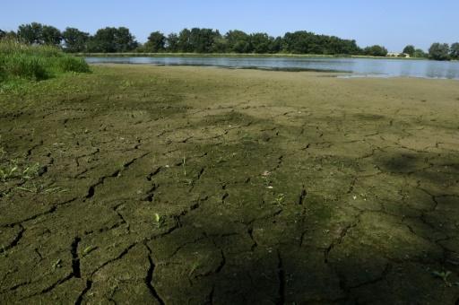 Un étang en voie d'assèchement, le 12 août 2015 à Saint-André-le Bouchoux (centre-est) © AFP PHILIPPE DESMAZES