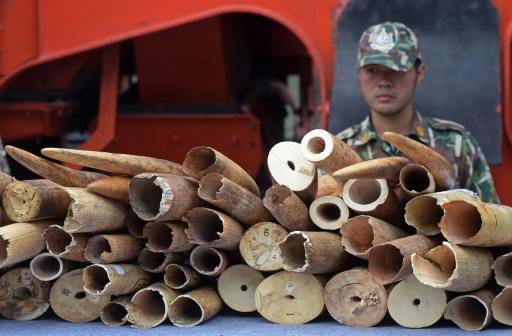 ivoire thailande