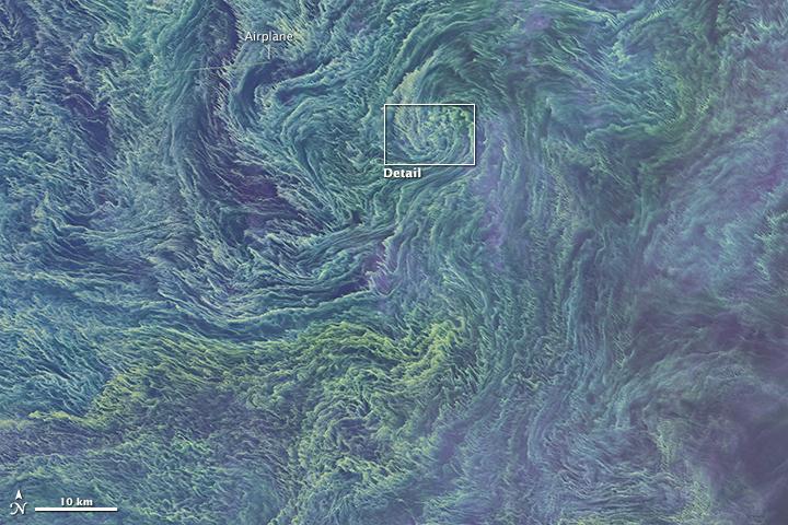Marée verte au large de la Lettonie Image : NASA Earth Observatory 11 aout 2015