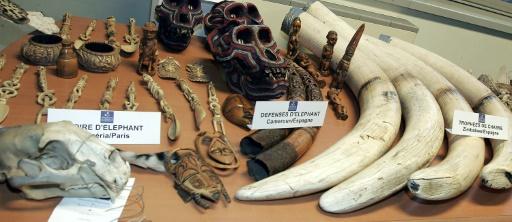 ivoire saisie