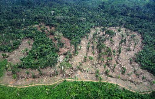 Photo publiée par l'institut brésilien Ibama montrant une zone touchée par la déforestation en Amazonie, le 21 mars 2014 © Ibama/AFP/Archives HO