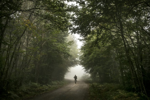 Cop21 forêt