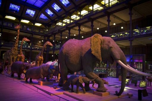 Des animaux empaillés présentés à la Grande Galerie de l'Evolution à Paris, le 16 septembre 2014 © AFP/Archives Joel Saget