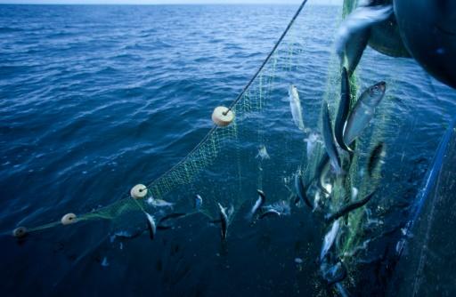 quotas de pêche